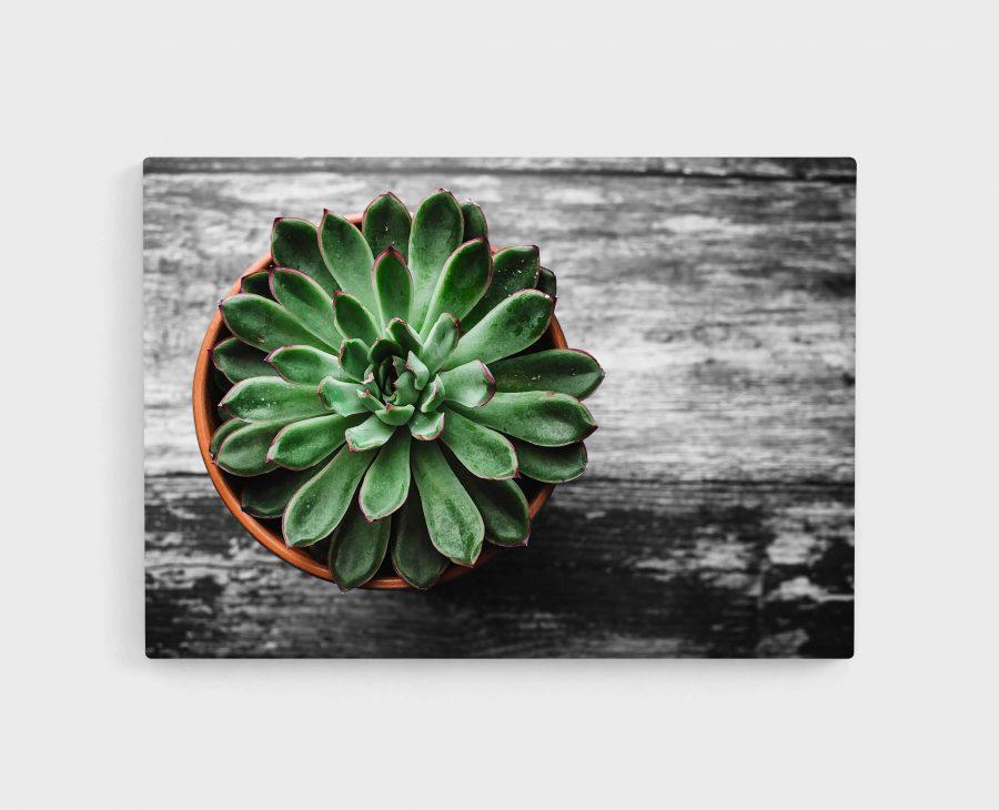 Plantje in pot poster en print