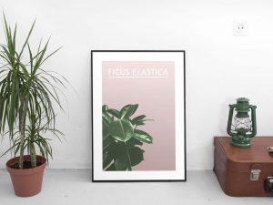 Indische Rubberplant Poster en Print