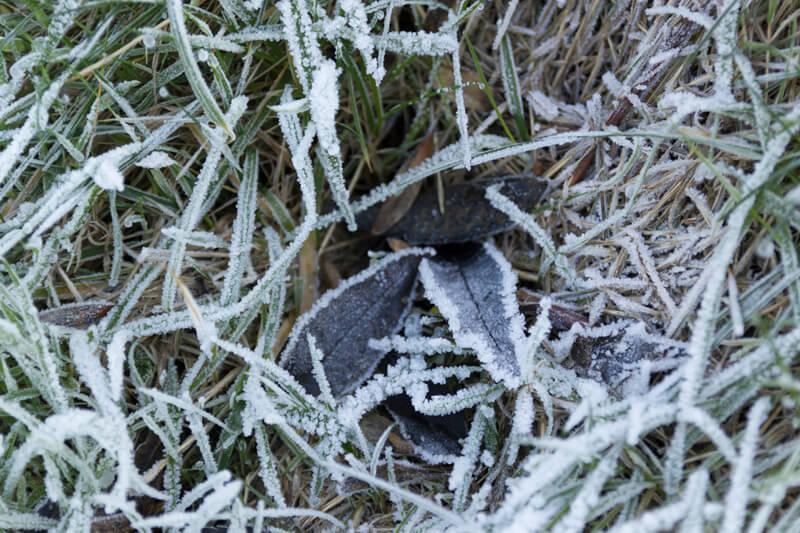 Bevroren blaadjes in het gras dat wit ziet van de vorst