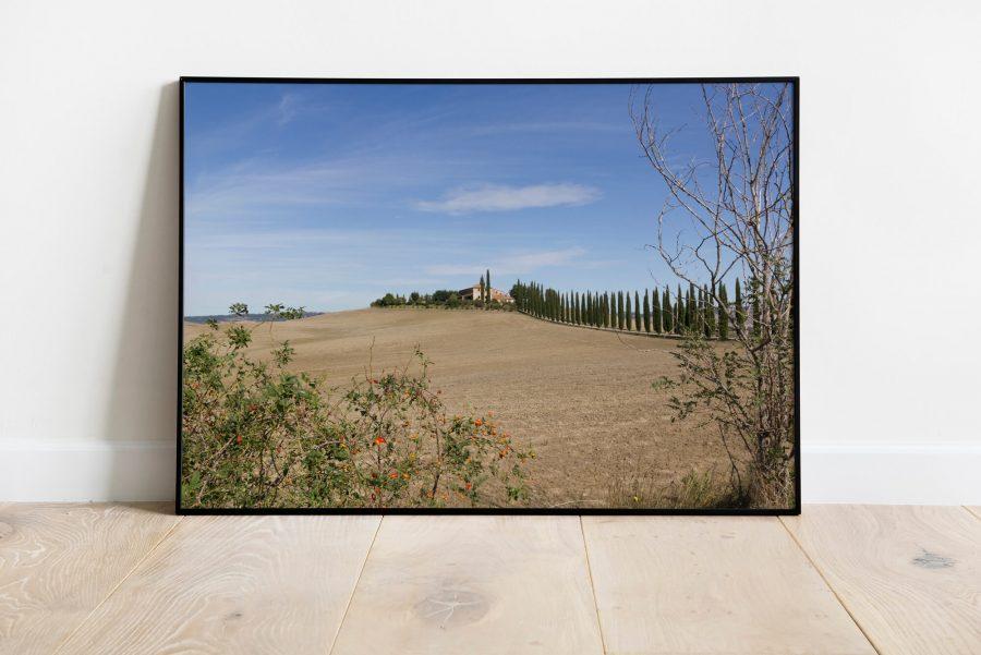 Toscane cipressen wanddecoratie