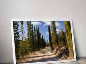 cypressen laan Toscane Poster
