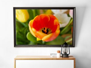 Oranje Tulp Close Up Poster - Bloemen Wanddecoratie