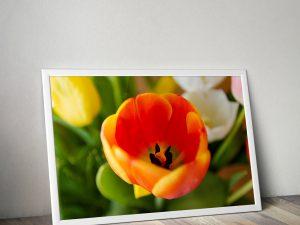 Oranje Tulp Macrofotografie Poster - Bloemen Wanddecoratie