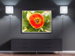 lente poster met oranje tulp close up - Bloemen Wanddecoratie