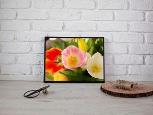 tulpen lente poster - Bloemen Wanddecoratie