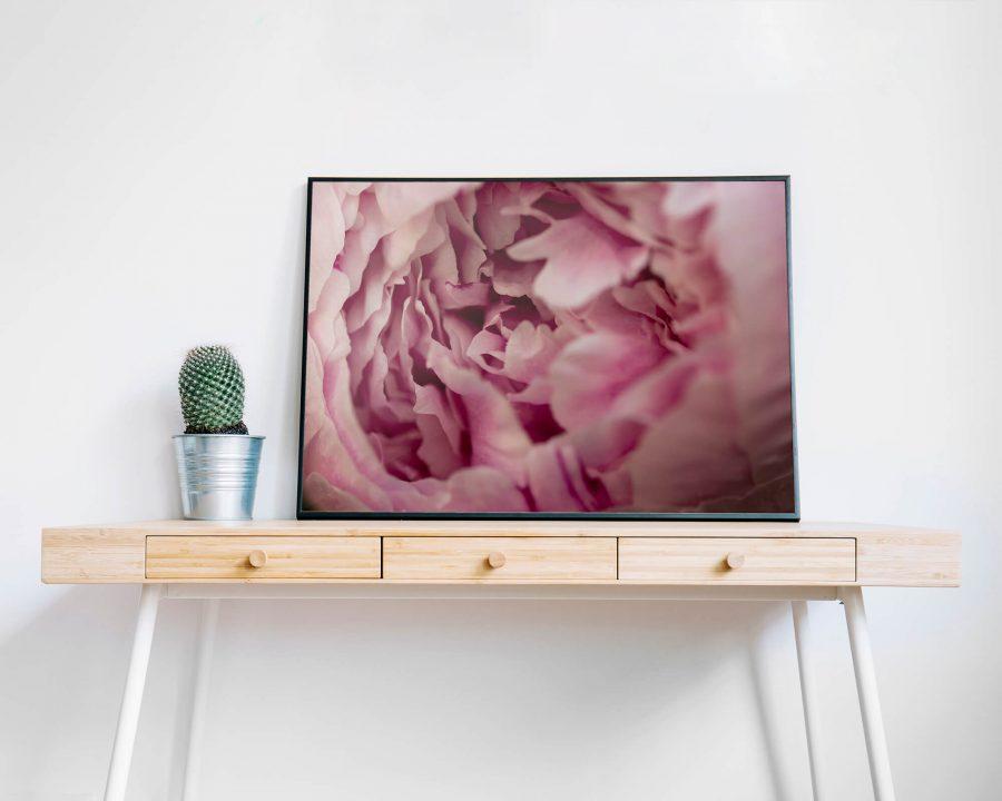 Roze Pioenroos - Botanische Wanddecoratie