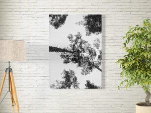 Bomen van onderen poster en print