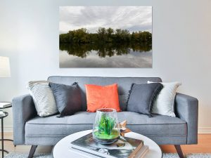 Trees Reflection - Natuur Poster en Print